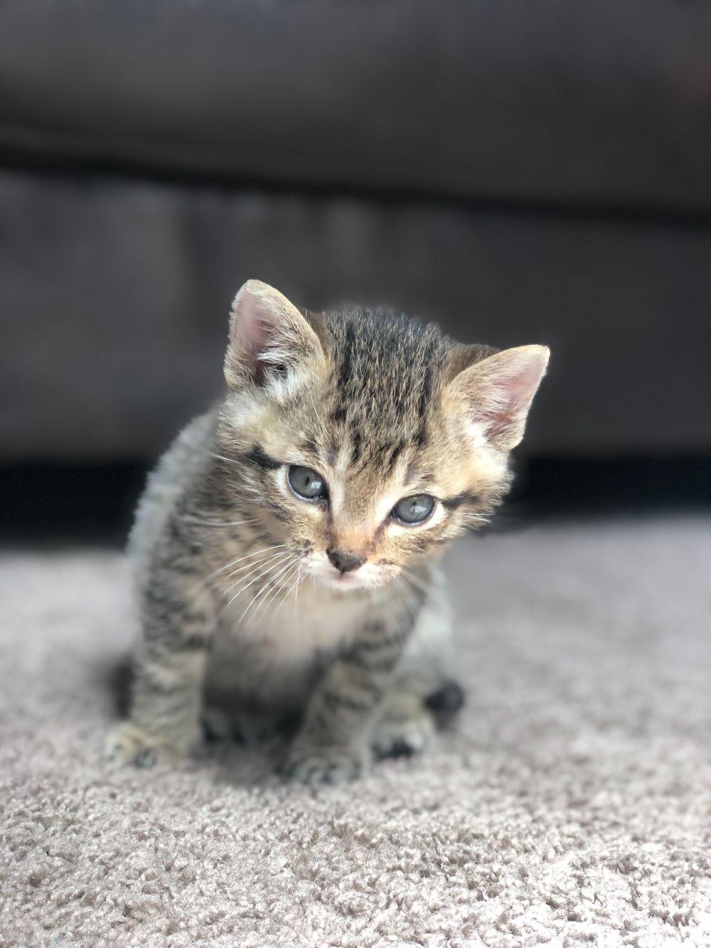 Co Zrobić żeby Kot Nie Sikał W Domu Dzięki Tym Sposobom