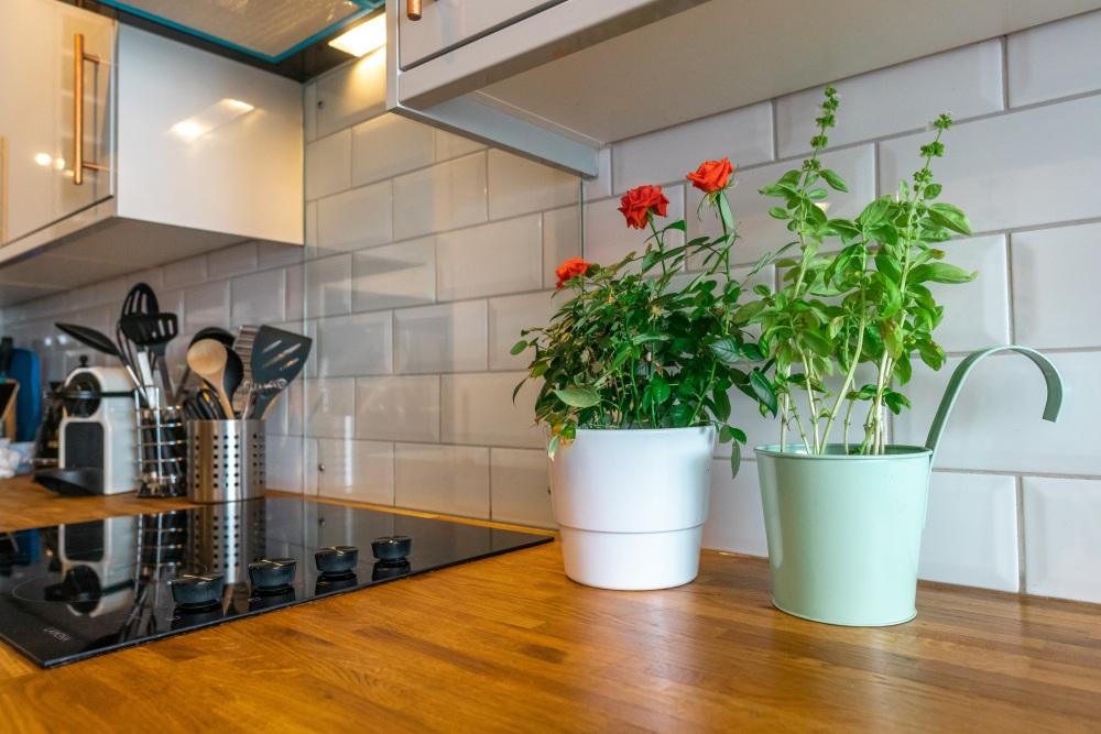 Jaki Sprzęt Agd Do Kuchni Wyposażenie Które Musisz Kupić