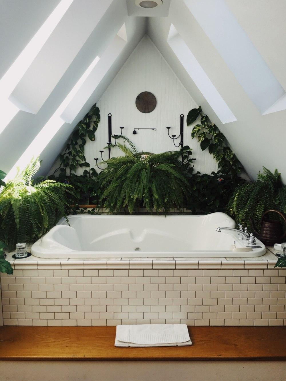 Jaki Kwiat Do łazienki Zobacz Listę Roślin I Poznaj Inne