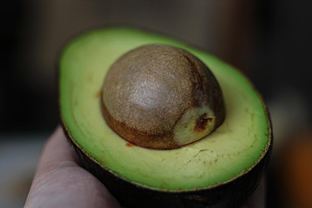 Выращивание авокадо, как вырастить авокадо дома, авокадо в квартире