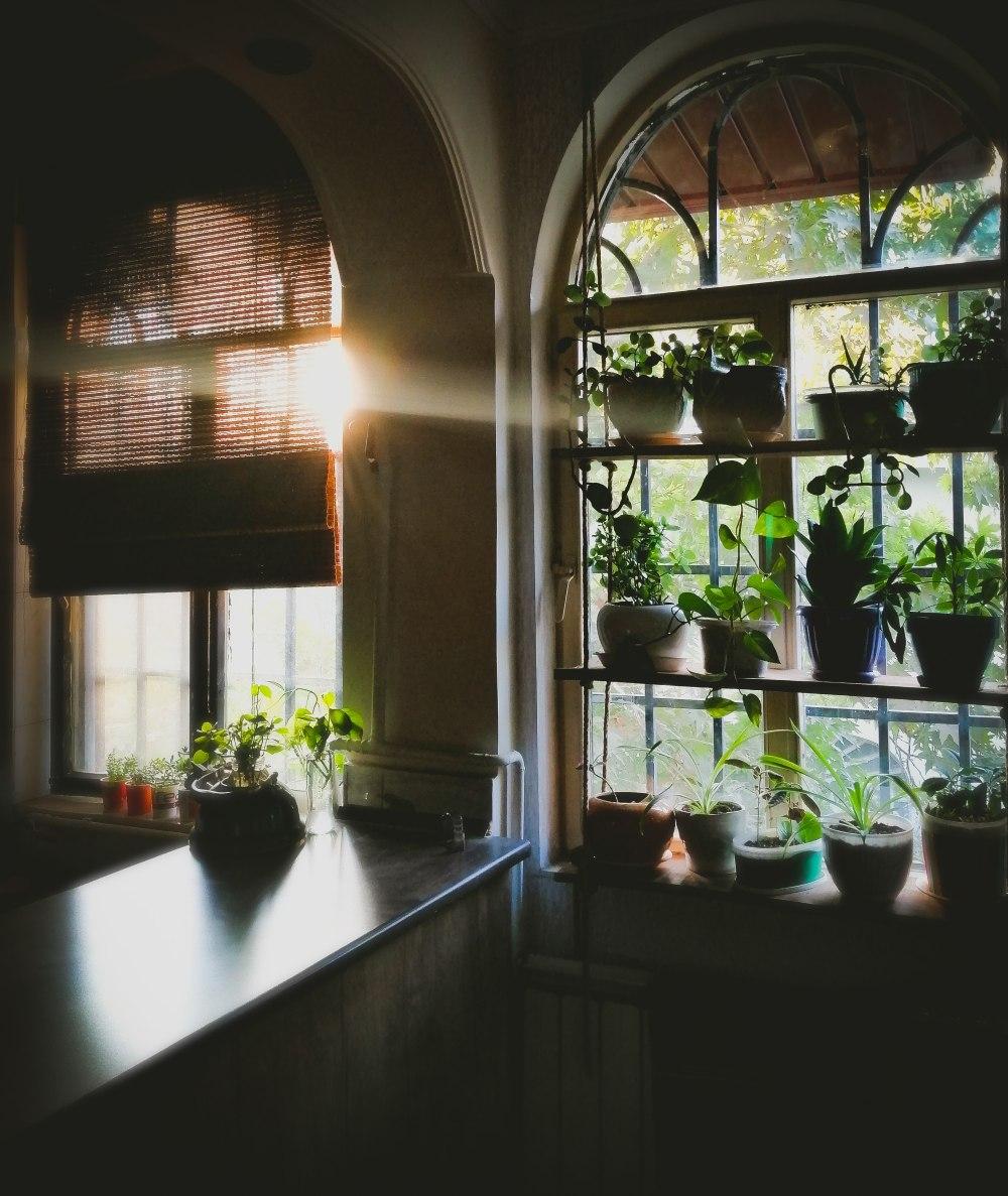 биофилия, растения в квартире, цветы в квартире