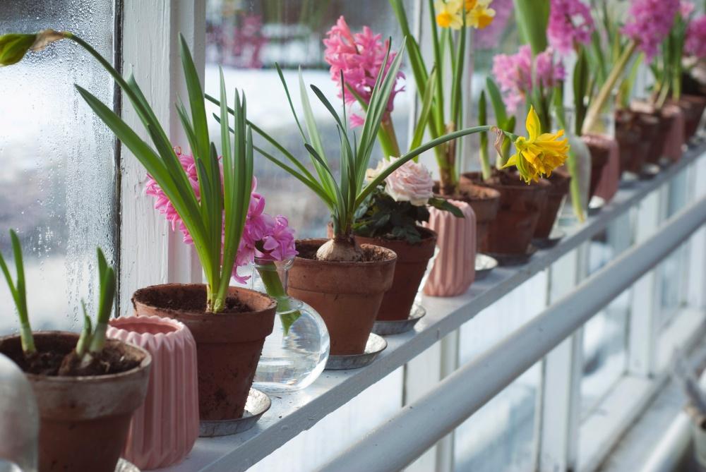 какие растения избегать в спальне, растения в спальне, ядовитые цветы в спальне